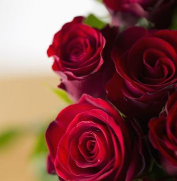 Valentine's Dayroses